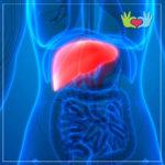 quiste hepatico